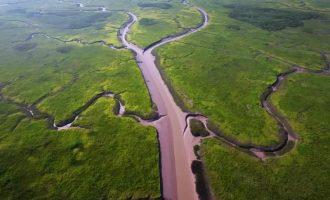 崇明这7个湿地被列入第一批上海市重要湿地名单,你去过几个?