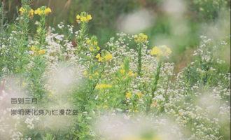 春天了, 来崇明赏花胜地看看春景…