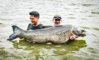 厉害咯!老外和中国朋友在明珠湖钓到一条1.7米长的乌青,简直是乌青王啊!